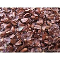 Semillas Cipres de Arizona Cupressus Arizonica