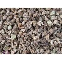 Semillas Vivorera Gigante Echium Boissieris
