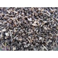 Semillas Vivorera Echium Plantagineum