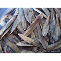 Semillas Fresno Fraxinus Angustifolia