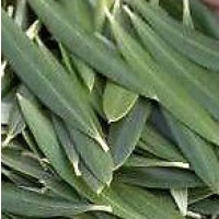 Hoja Olivo Triturada. 1 Kgr. Reduce Hipertensión,colesterol. Herboristeria