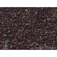 Semillas Hierbabuena de Burro Mentha Rotundif