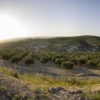 GRAN Finca de Olivos en JAEN