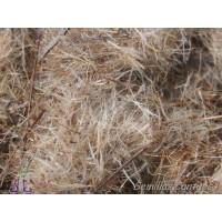 Semillas Yezguera de ROCA Phagnalon Saxatile