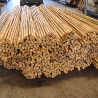 Tutores Tailandeses 240 Cm. 26/28 Mm. Pack de 25
