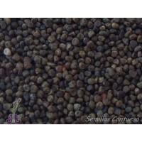 Semillas Tomillo Limonero Thymus Baeticus