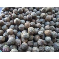 Semillas TILO Tilia Platiphyllos
