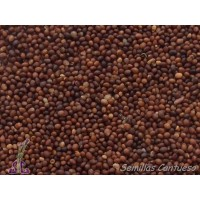 Semillas Almoradux, Mejorana Thymus Mastichina