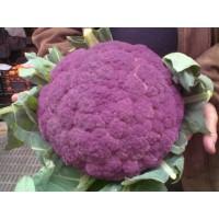 Coliflor Violeta de Sicilia. 3 Gr / 750 Semillas