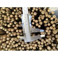 Tutores de Bambú de 60 Cm 8/10 Mm  400Pcs