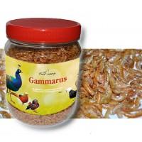 Gammarus Deshidratados