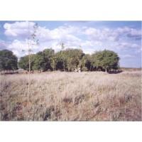 la Pampa 5.000 Hectáreas Ganaderas - Dueño Vende - Contactar en España