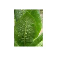 Tabaco de Pota Ecológico 0.1g