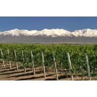 Viñedos en Montañas 50 Hta + Bodega Pequeña Mendoza -Argentina.vde.intermediario al 3%