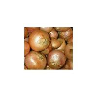 Cebolla de Figueres Ecológica 1g