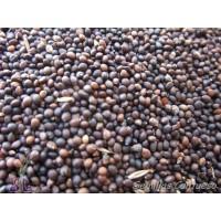 Semillas Salvia de los Prados Salvia Pratensis