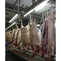 Carne Fresca de Cerdo Ibérico