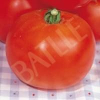 Tomate de Mata Baja. Semillas 2 Gr