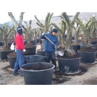 Trabajadores Tailandeses para el Campo