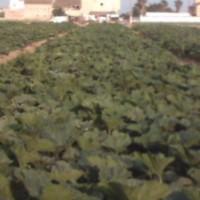 Disebi Cobre Algas Asimilables 25 L. (Fungicida Ecologico)