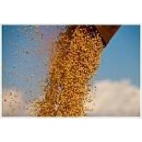 Disponemos para la Venta  Soybean Brasil