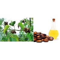 Maquila - Aceite de Sacha Inchi