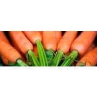 Plantas de Zanahoria en Bandeja de 12 Unidades