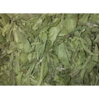 Stevia Rebaudiana Criolla