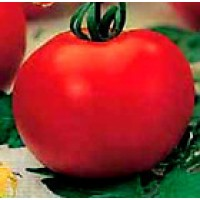 Tomate Alexandre. Rastrero. 0,20 Gr / 60 Semi