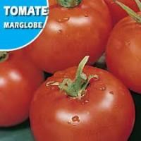 Tomate Marglobe 1Gr
