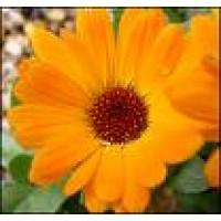 Asesoramiento Gratuito para Plantas, Plantones