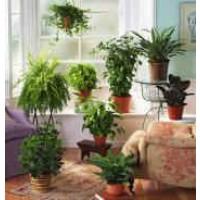 Asesoramiento Gratuito para Plantas