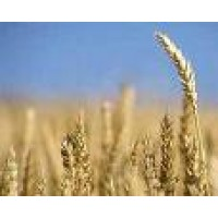 Disebi Cereales