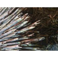 Puntales de Cañas Española 0.60X50