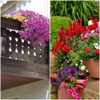 Semillas Mezcla de Flores Terrazas y Balcones.  50 Gramos
