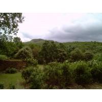 214 Has. Cerca de Guadalupe (Cáceres). Ganadera y Caza Mayor