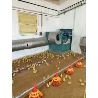 Calderas para Granjas de Pollos Instalacion