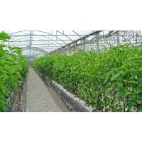 Fertilizante Ecológico Febiona