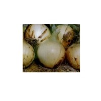 Semillas Cebolla Babosa Sm-1(Extra-Temprana), 25 Gr