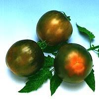 Semillas Tomate Kaki. 1000 Semillas