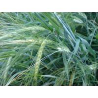 Cereales Ecologicos Ecoorce