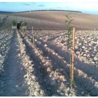 Plantaciones de Almendros con Plantadora Gps