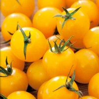 Tomate Golden Cherry Ecológico 0,5g