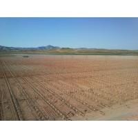 Plantaciones de Pistachos con Plantadora Gps