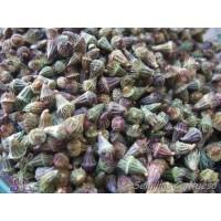 Semillas Hierba de SAN Guillermo Agrimonia Eupatoria