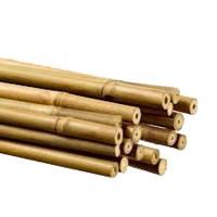 Tutor de Caña de Bambú  60 Cm