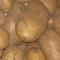 200 Kilos de Patatas