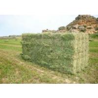 Alfalfa-Heno-Paja