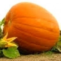 Calabaza Gigante Atlantic Giant. 25 Semillas.