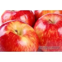 Peras y Manzanas Frescas 2016